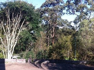 Affordable Tree Service Brisbane