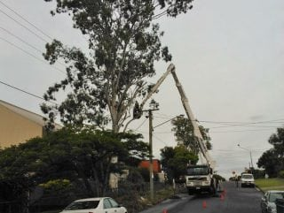 Tree lopping all across North Brisbane