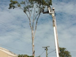Tree lopping all across the Brisbane Metro Area