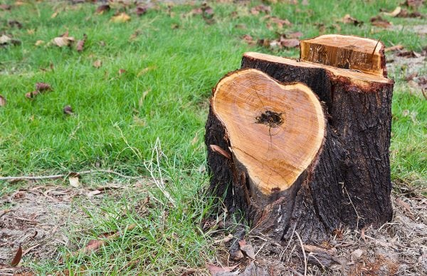 Tree Stump Removal & Stump Grinding